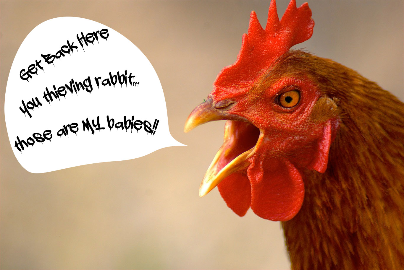 Funny Chicken Quotes: Rooster Quotes And Sayings. QuotesGram